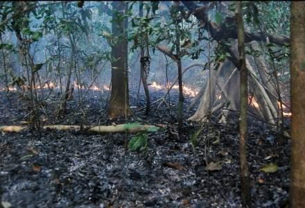 """Erica Berenguer: """"De 2004 para cá o Brasil reduziu a taxa de desmatamento em 70%. É possível sim combatermos o desmatamento, mas isso depende tanto da pressão da sociedade quanto da vontade do governo de assumir a responsabilidade pelas atuais taxas e parar com discursos que promovam a impunidade no campo""""."""